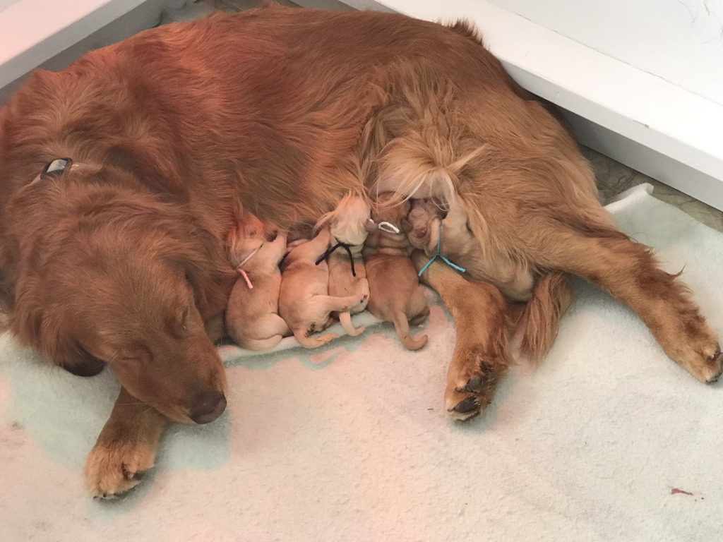 """Gypsy and Puppies - The """"Let"""" Litter"""