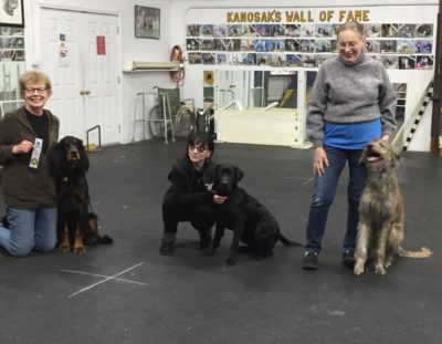 AKC Star Puppy Certification
